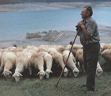 El cuidado del pastor
